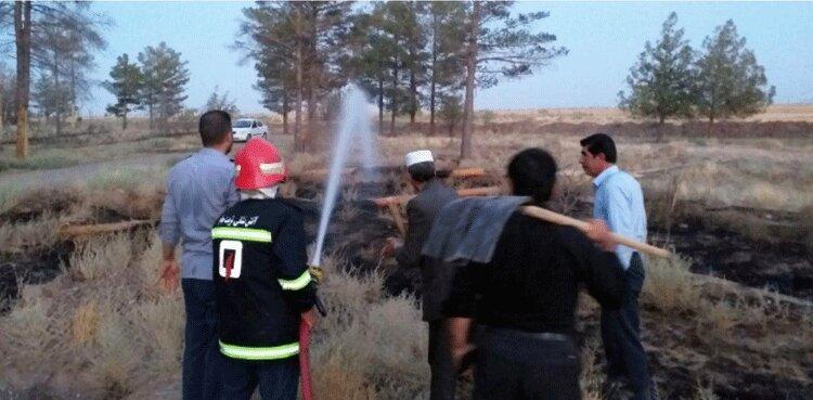 آتش تیر بر پارک جنگلی تربت جام