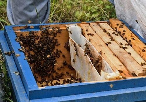 فراوری عسل و برطرف مسائل زنبورداری در دانشگاه خلیج فارس صورت می گیرد