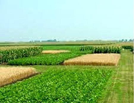کاهش فرسایش خاک با پسماندهای شالیکاری و صنعتی، رشد بذر علوفه ای بعد از 6 ماه مالچ پاشی
