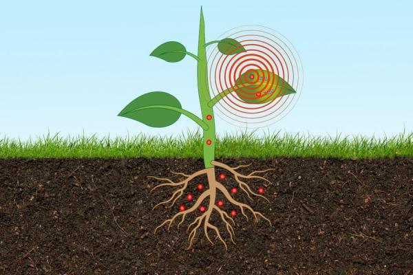 سنسوری که سطح آرسنیک خاک را اندازه گیری می کند
