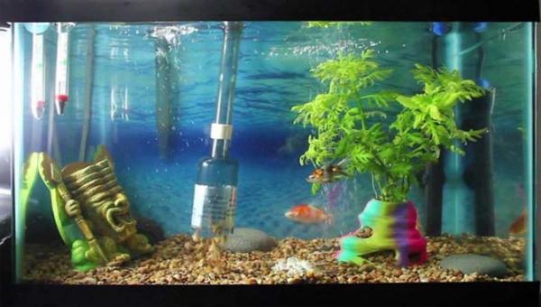 روش صحیح تمیز کردن آکواریوم ماهی آب شیرین