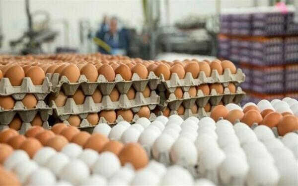 قیمت تخم مرغ در مرغداری چند است؟